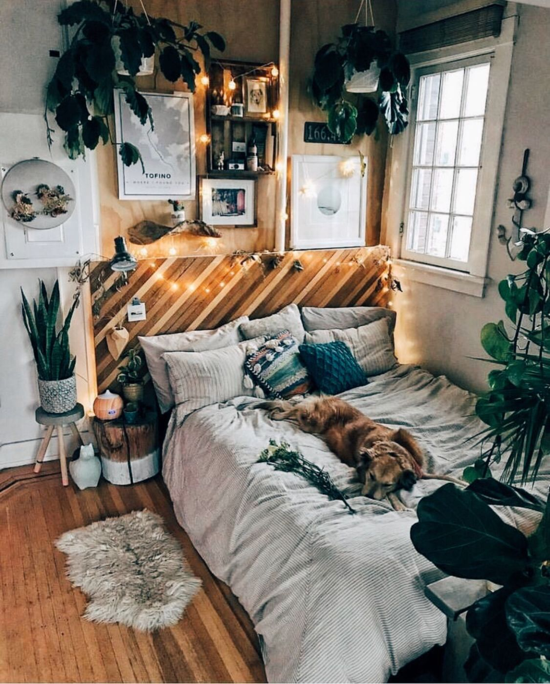 Bedroom Cute Comfy Cozy Plants Lights In 2019