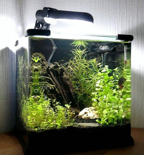 Superfish Aqua Cube