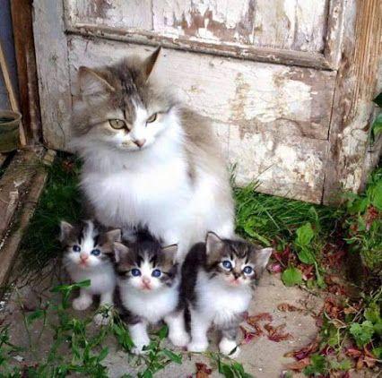 Guarding my babies!a