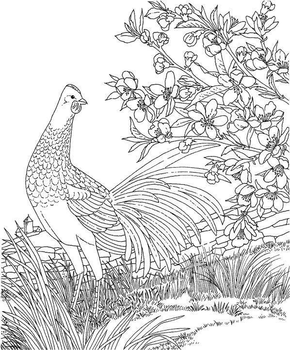 Delaware Blue Hen Chicken Coloring Page Purple Kitty Coloring