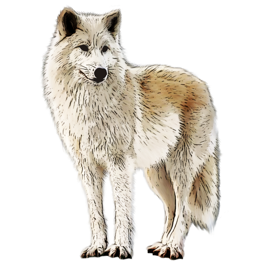 Arctic Fox Png Image With Transparent Background Stock Images Free Arctic Fox Png Images