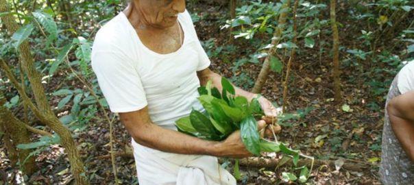 Нараянамурти — целитель из Индии, который лечит рак | Фитотерапия ...
