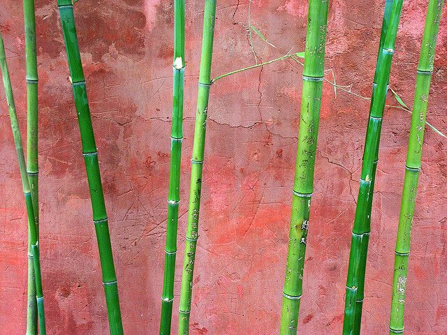 Green on Red    Bamboo and wall