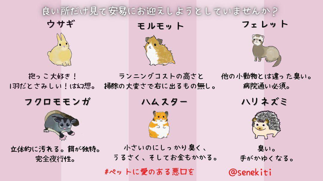 ちゃんと理解しておこう これから動物を飼おうとしている人に知っておいてほしいこと ペット 2021 動物 猫 ポケモン ペット