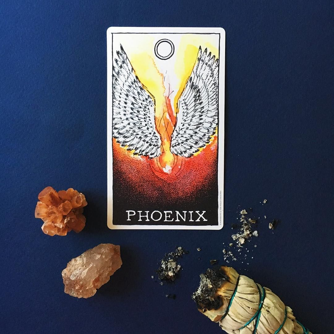 92316 animal spirit of the day the phoenix ive never