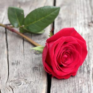 Pin On Beautiful Red Roses For Love