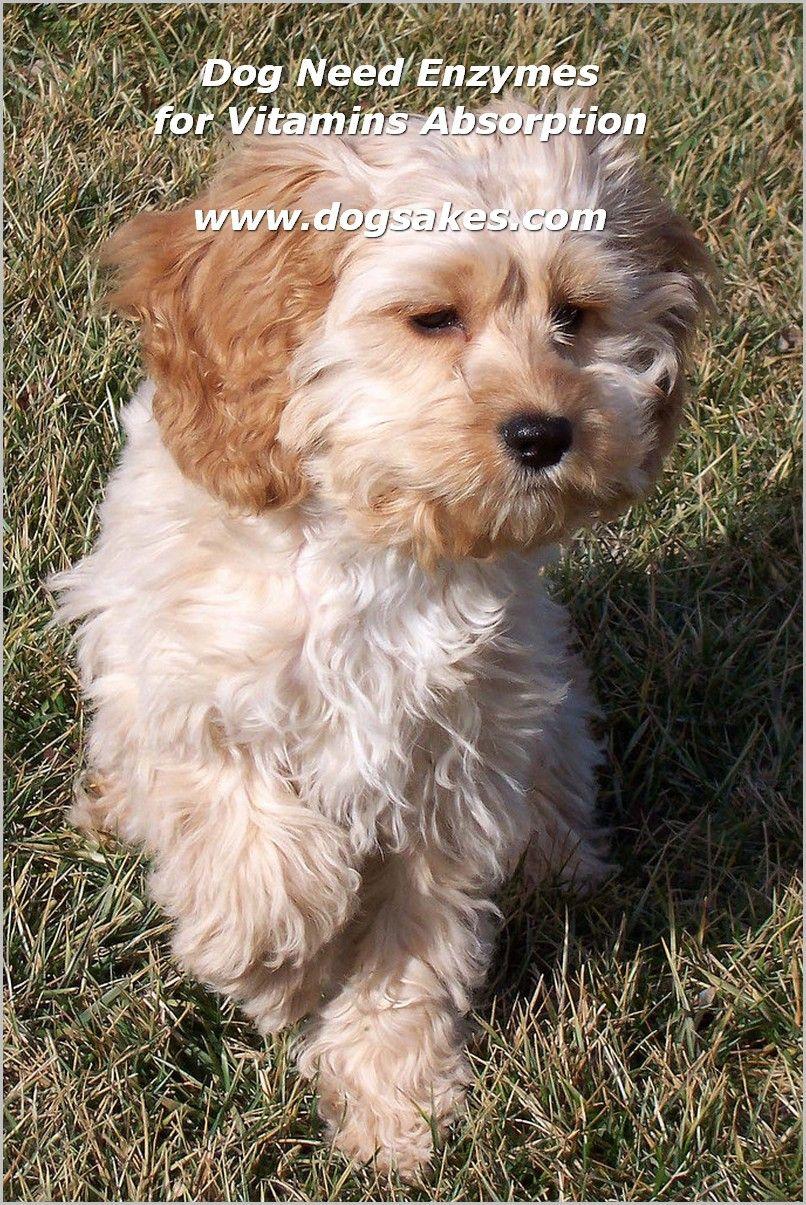 Interactive Dog Toys Interactive Dog Toys - Dog Sakes