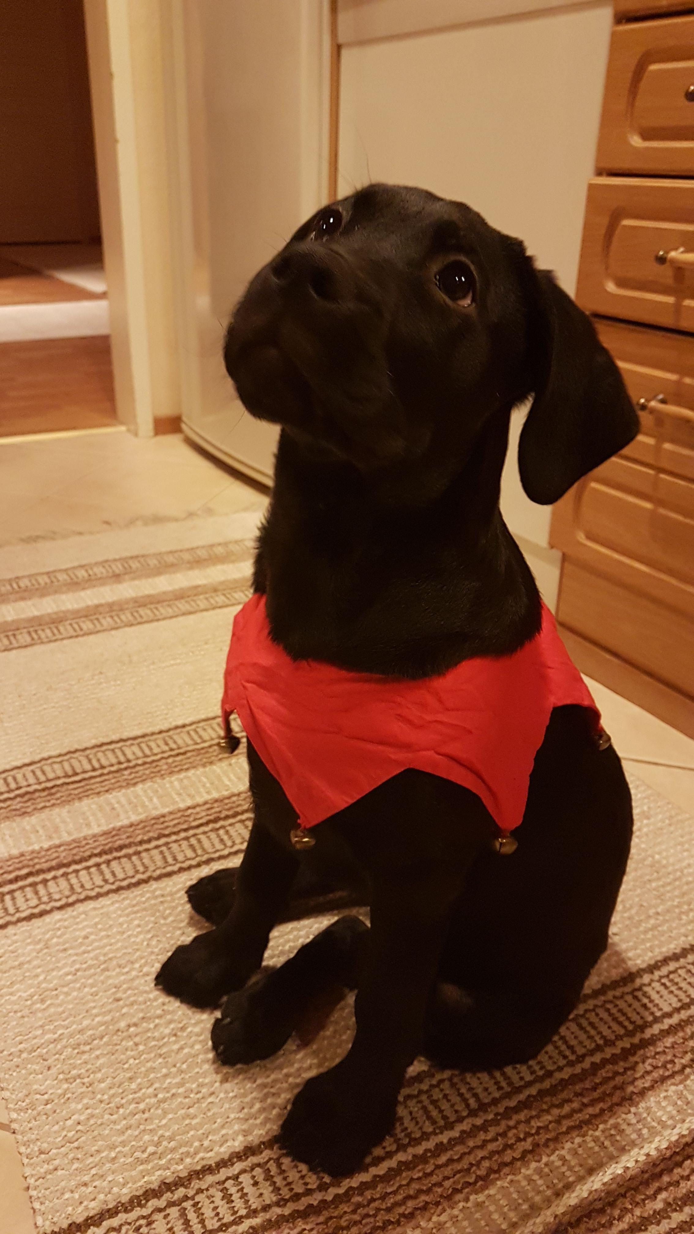 Meet hilda a cute little doggo iftphdeyv awwalerts