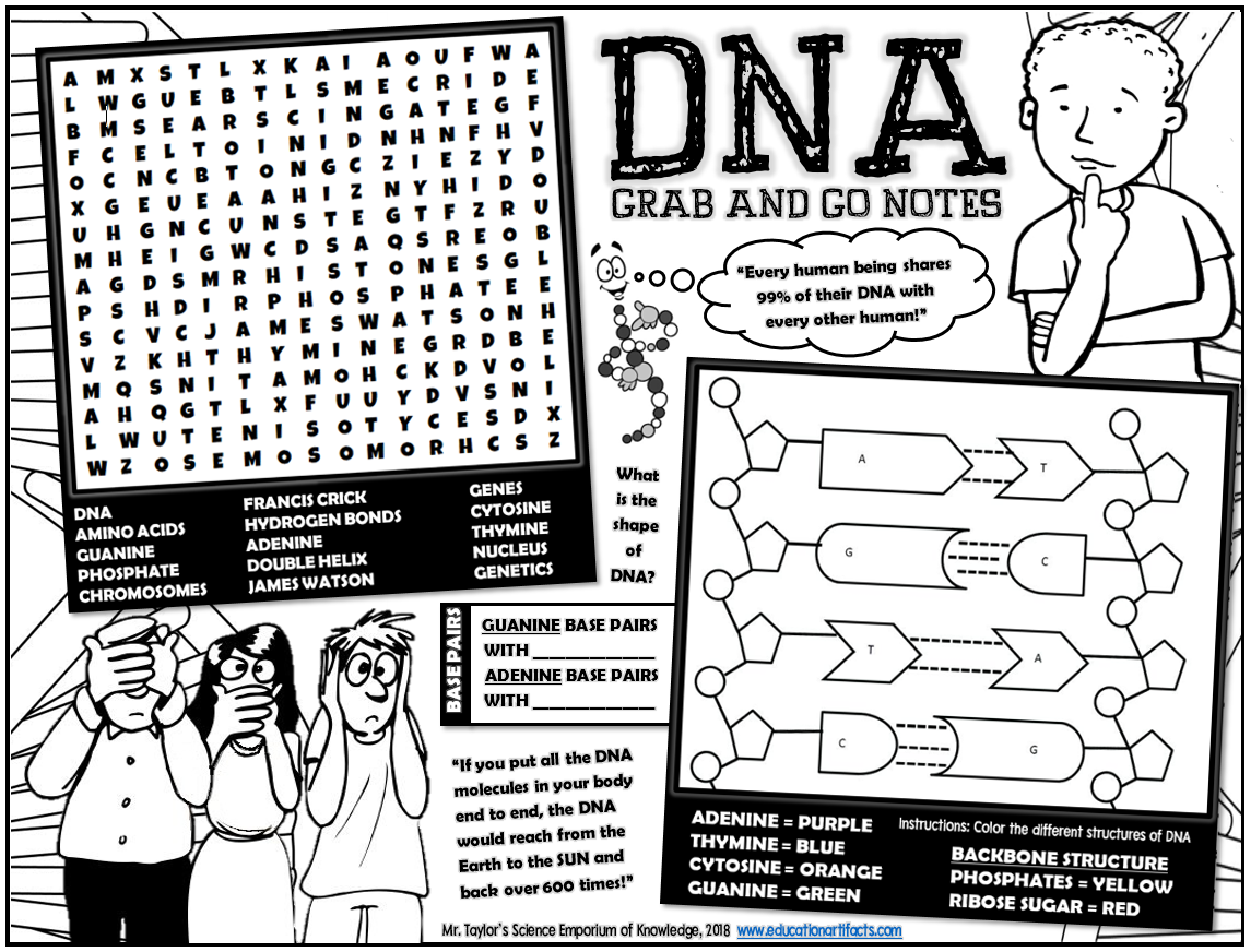 Grab And Go Notes Dna Activities And Games Worksheet