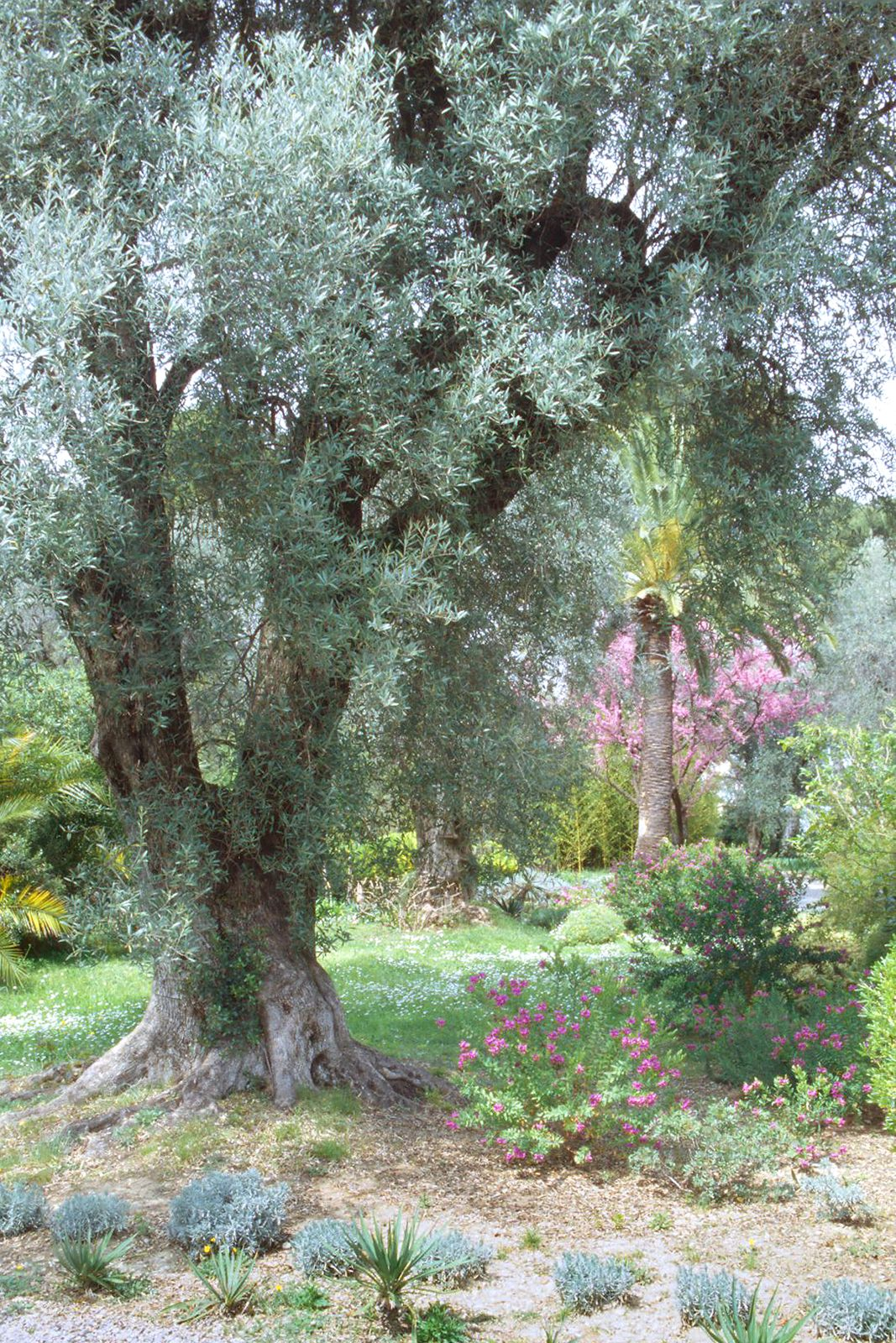Renoir S Garden Cagnes Sur Mer France I M So Lucky To Have Visited Renoir S Home In The South Of France Jardines Paisajes Pierre Auguste Renoir