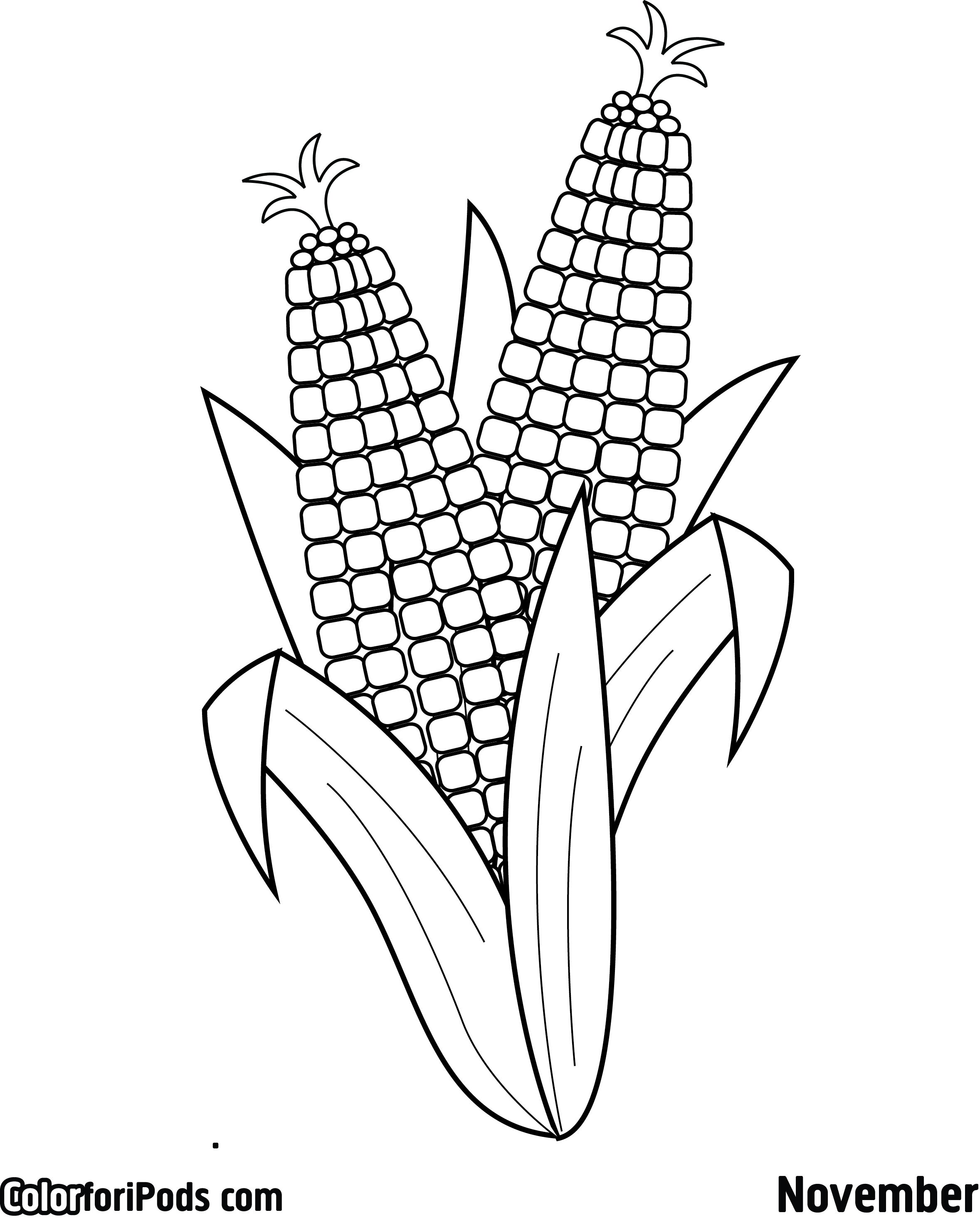 corn coloring page aboriginal