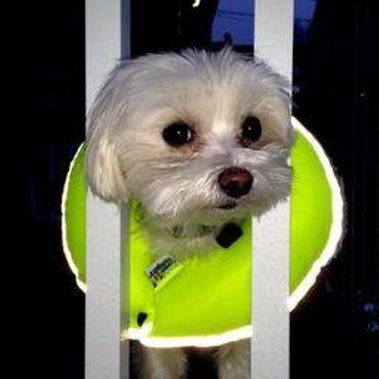 Puppy Bumpers Keep You Dog Safely Behind Fences And Railings Http