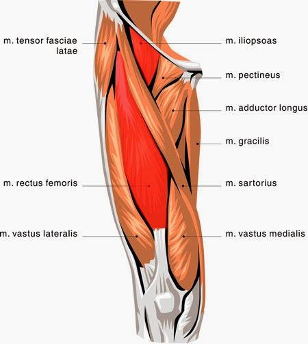 Upper Thigh Something To Think About: PHYSIO ANSWERS: Quick Link! How Should I Treat My Sore And