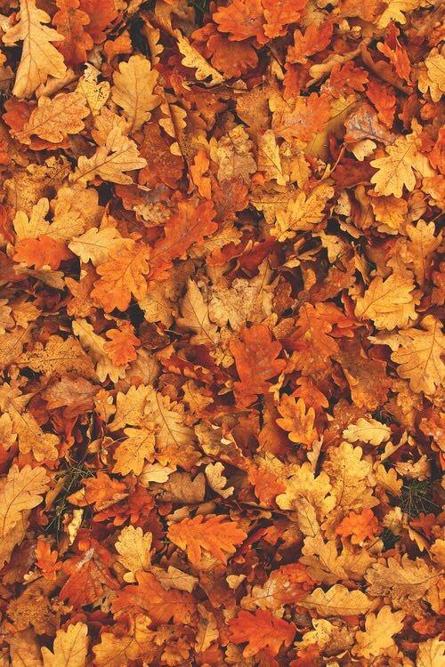 Via Tumblr Paper Fall Wallpaper Fall Background Fall
