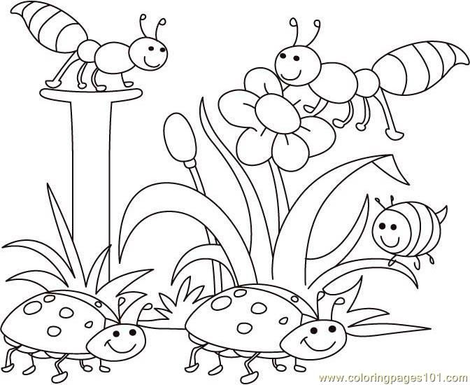 bugs and flowers colouring pages   Easy coloring pages ...