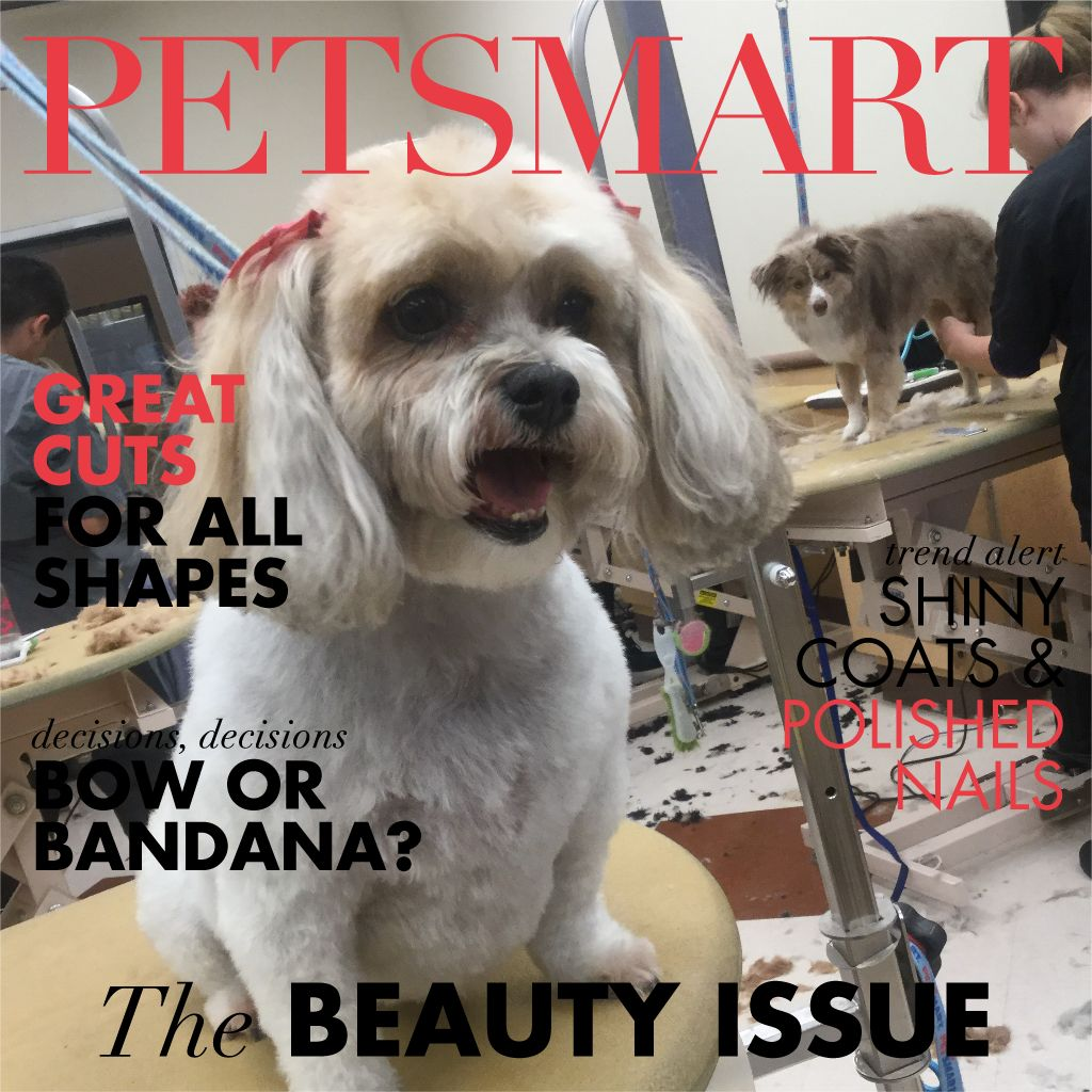 Heres my pet photo animal photo pets petsmart