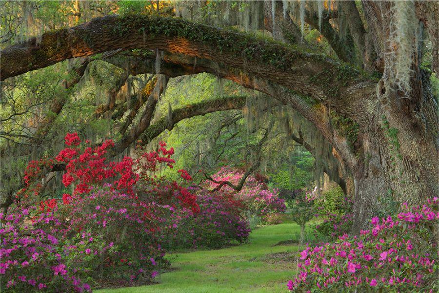 bb495f11ce43fc355fcb74649f35b35d - Magnolia Plantation And Gardens South Carolina