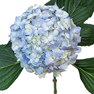 Amazon.com: flowers #blueflowerwallpaper