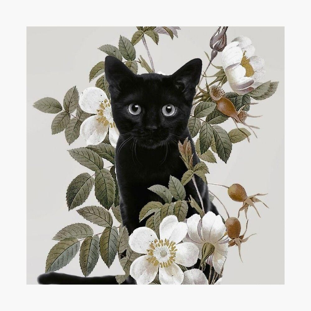 Black Cat With Flowers Photographic Print by Team / Animal
