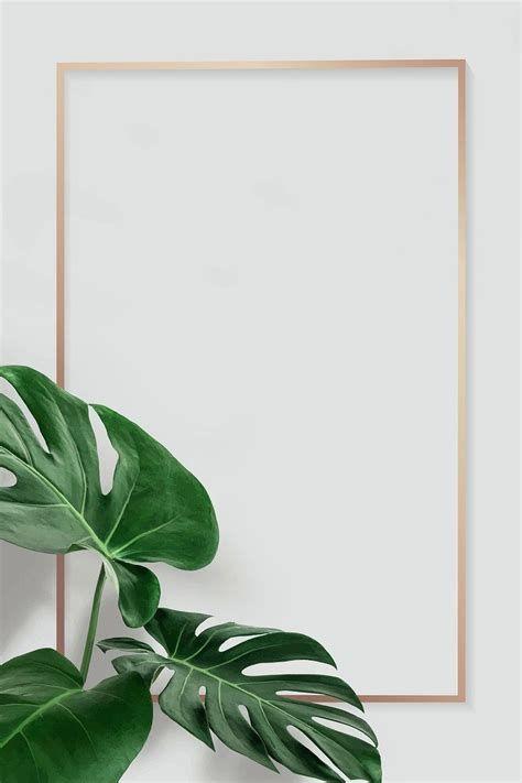 Golden Rectangle Monstera Leaves Frame Design Resource Vector 7BB