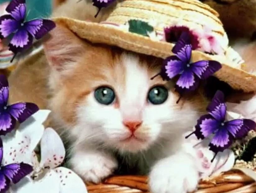 Cat Video Wallpaper Download
