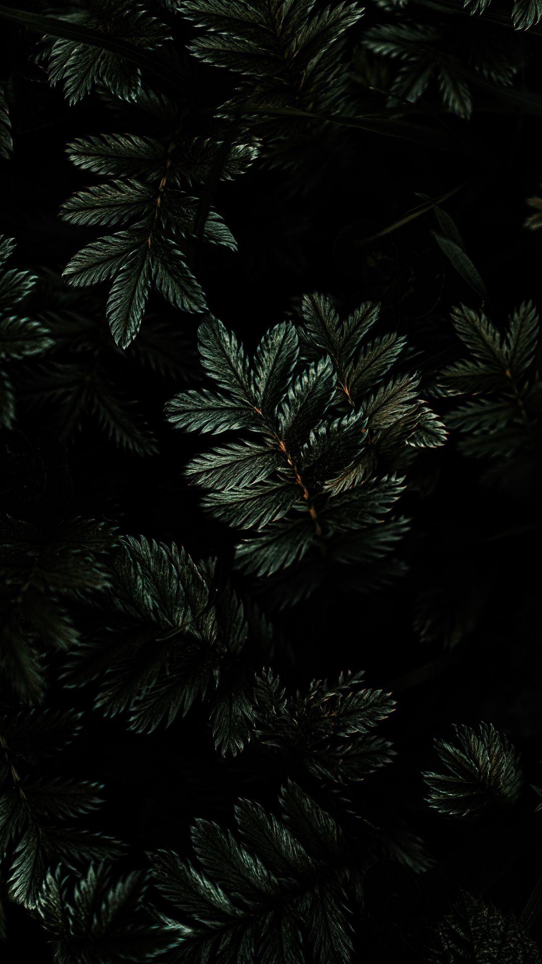 1080x1920 Leaves Branches Dark Wallpaper Dark Wallpaper Ipad Wallpaper Hd Ipad Wallpapers