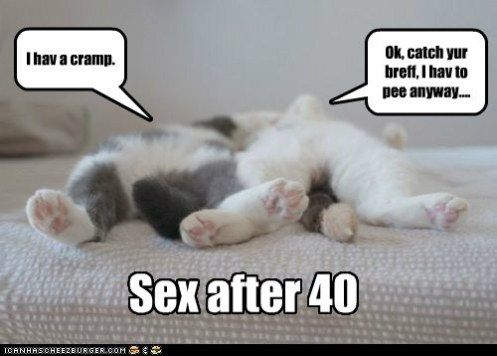 「cat after sex」の画像検索結果