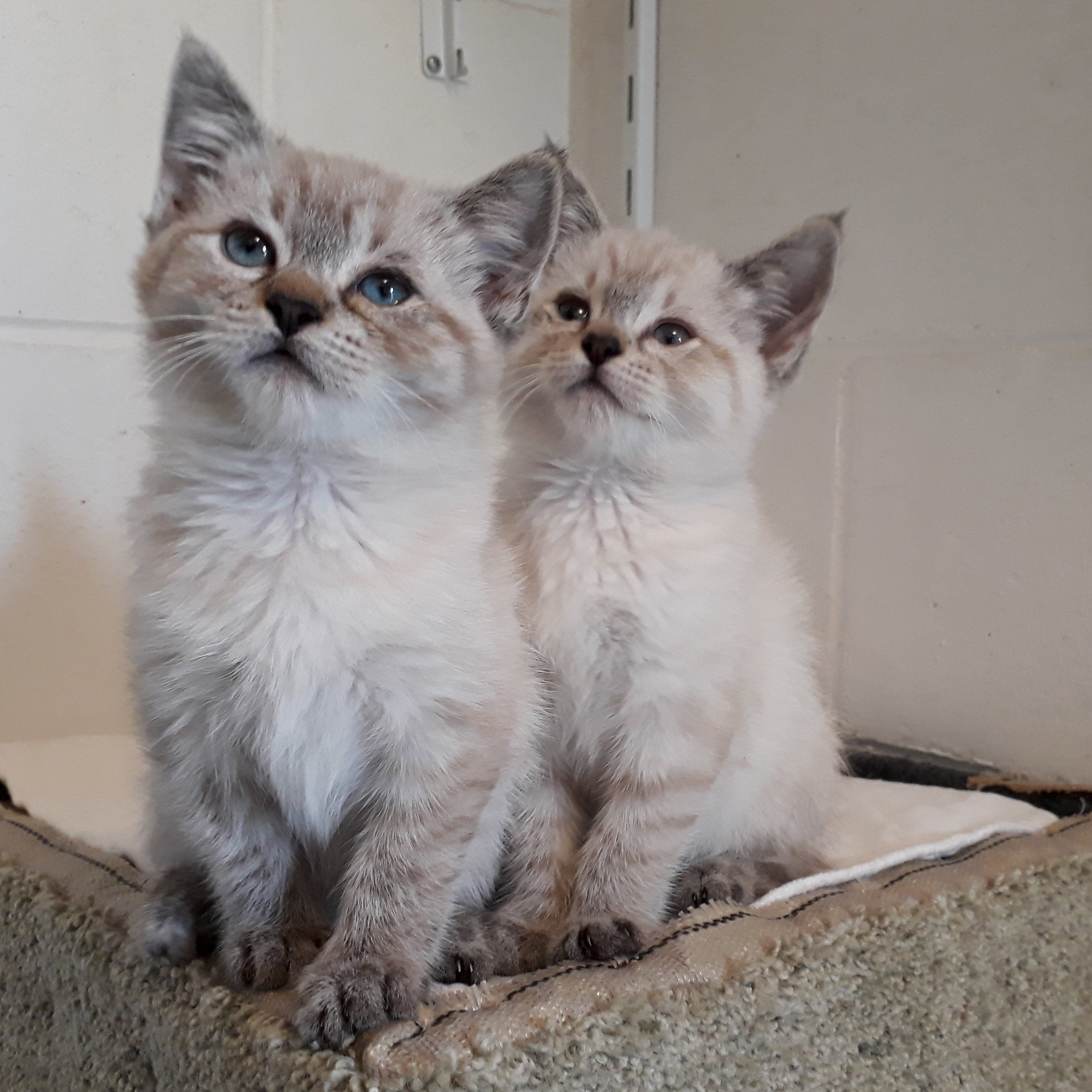 These Two Foster Kittens Were Abandoned When They Were Just A Few Weeks Old They Are 8 Weeks Old Now And Doing Great Foster Kittens Kittens Cutest Kittens