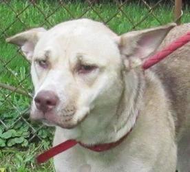 Petdetail Petfinder Dog Adoption Husky Dogs Dogs