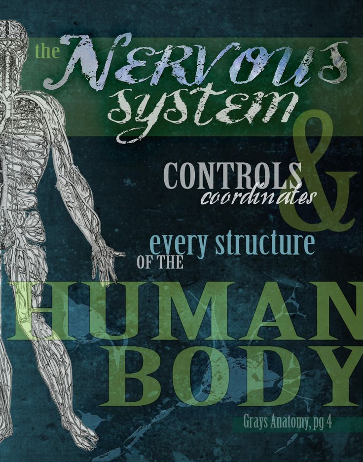 Chiropractic help to control nervous system chiropractic