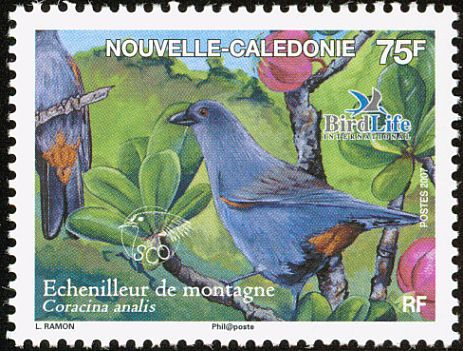 New Caledonian Cuckooshrike stamps - mainly images - gallery format