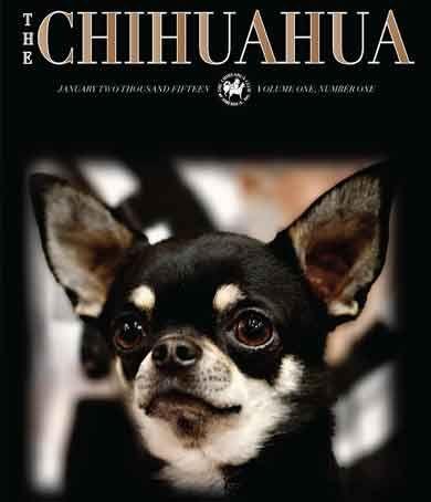 Chihuahua Club Of America Chihuahua Chihuahua Dogs Dog Breeds