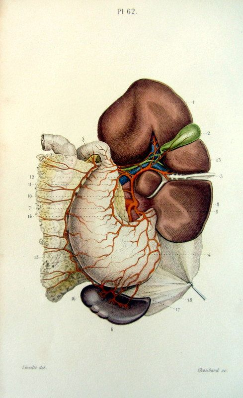 Vintage human anatomy internal organs print by LyraNebulaPrints ...
