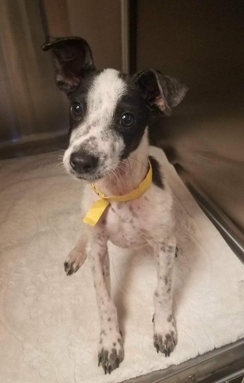 Adopt Mara On Pet Adoption Dog Adoption Pets