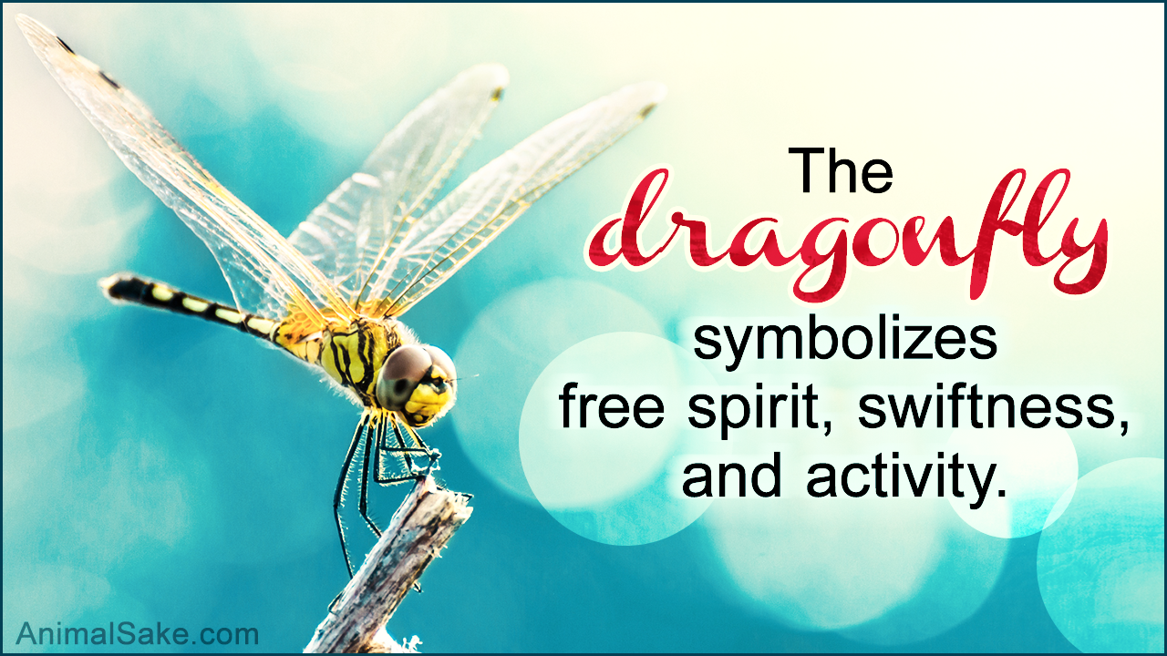 What Does A Dragonfly Symbolize Youd Be Stunned To Know