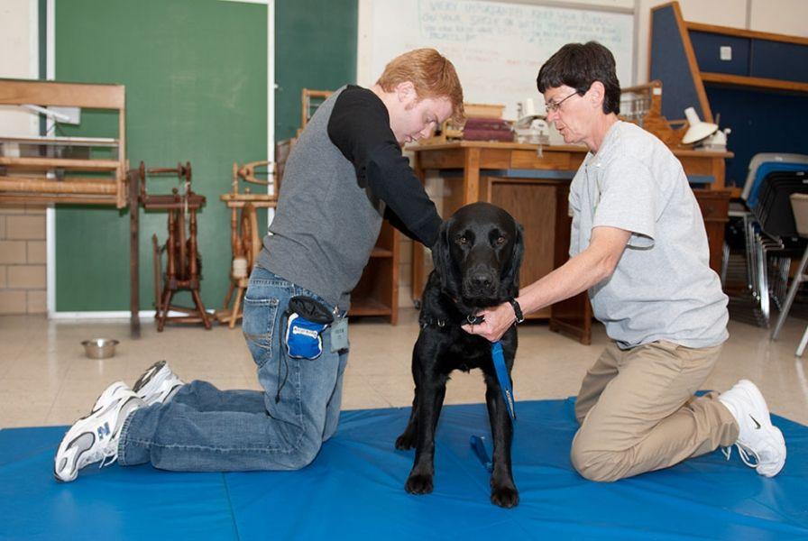 Diabetes service dogs hypoglycemic alert dogs dogs