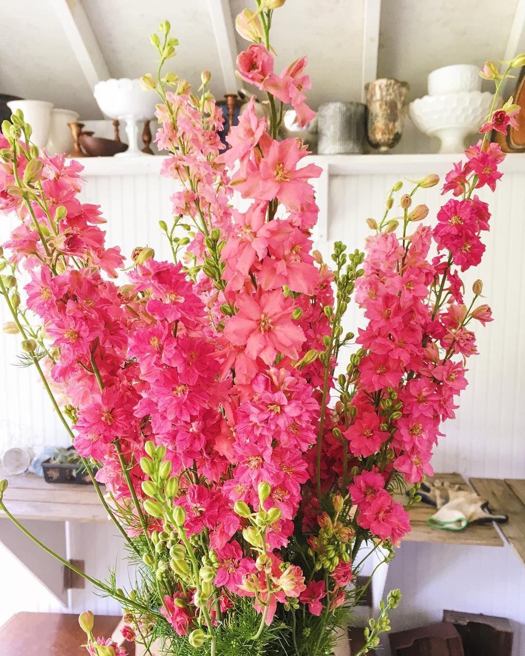 Larkspur grown at Love \'n Fresh Flowers. | June Flowers | Pinterest ...