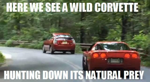Funny Corvette Meme | Cars: Old and New | Pinterest | Car ...