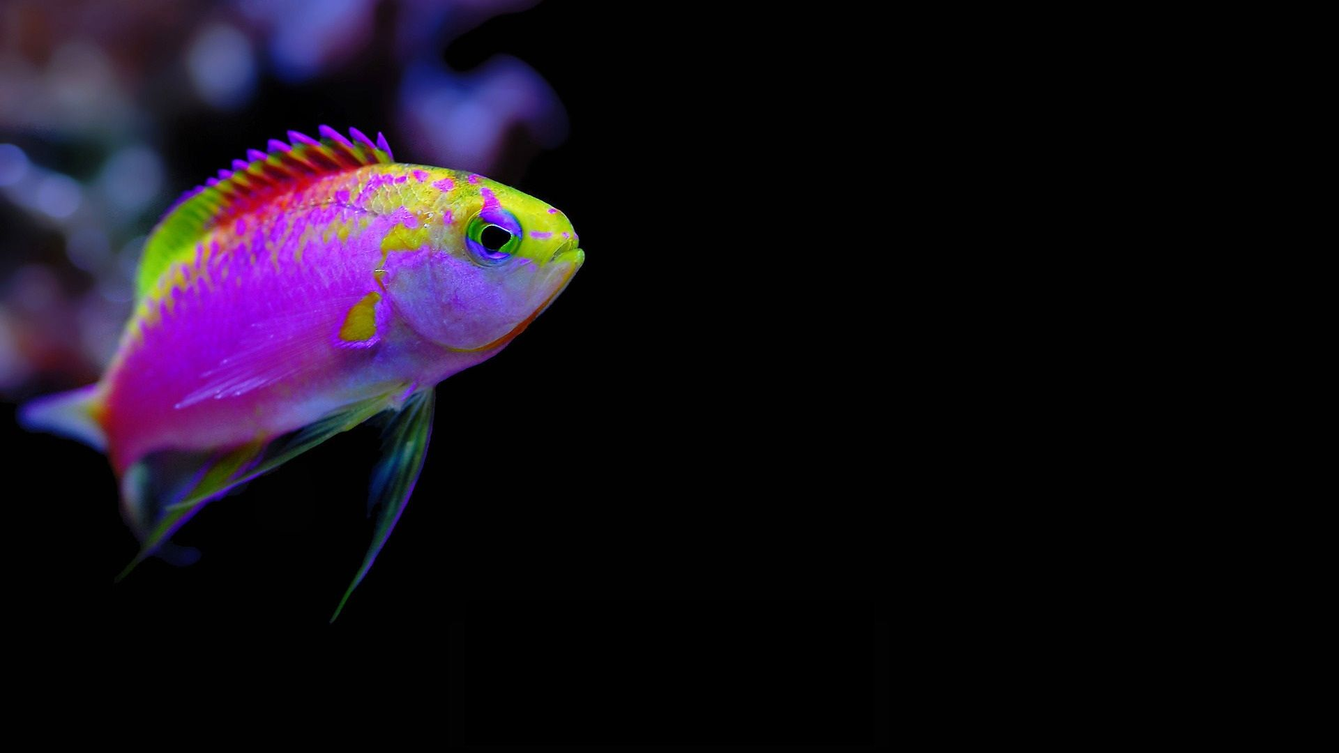 Underwater photography fish hd