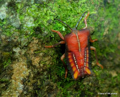 Photographic Wildlife Stories in UK/Hong Kong: Insects Are Everywhere