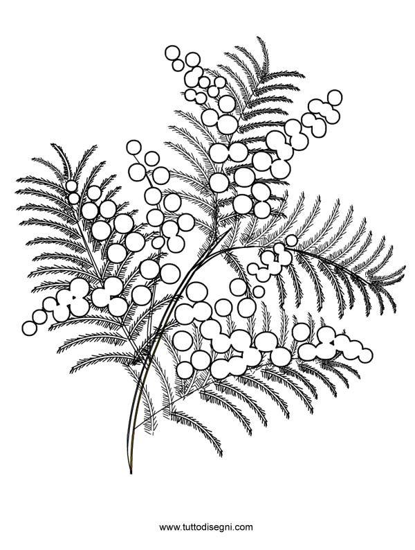 Mimosa Da Colorare.Disegno Mimosa2 Embrodery 2 Disegni Da Colorare Disegni