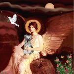 Angel / Min Schnauzer