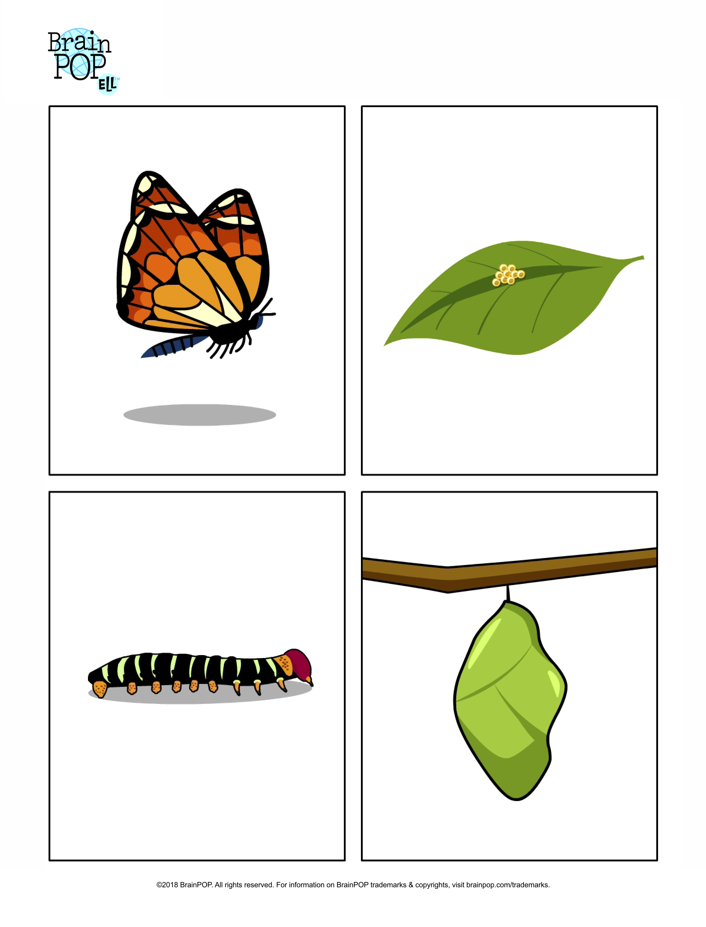 Use These Images Of The Stages In A Butterfly Life Cycle