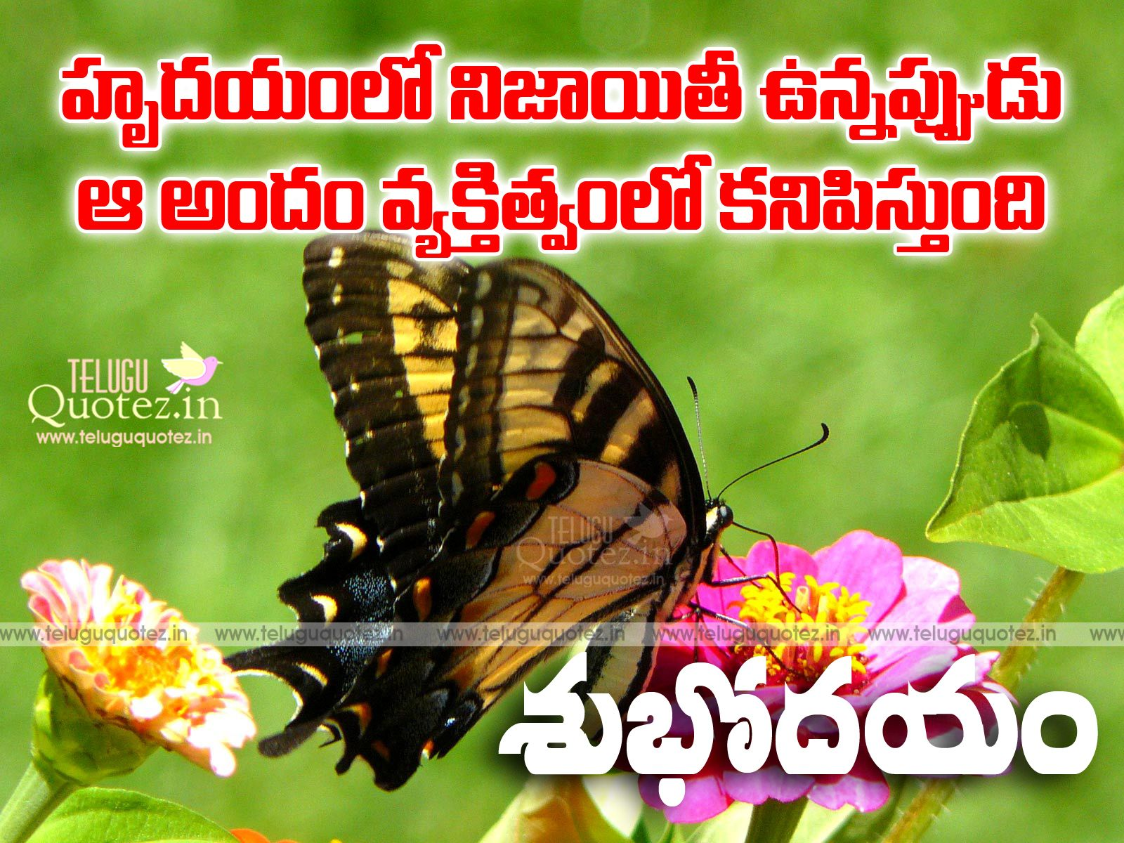 Best Good Morning Quotes In Telugu Greetings And Wishes   Teluguquotez.in  |Telugu Quotes|Tamil Quotes|Bengali Quotes|hindi Quotes