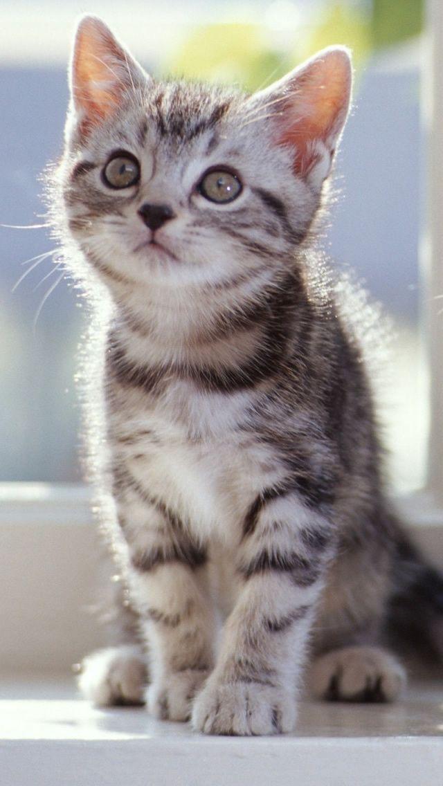 Tabby Kitten Kittens cutest, Tabby kitten, Beautiful cats