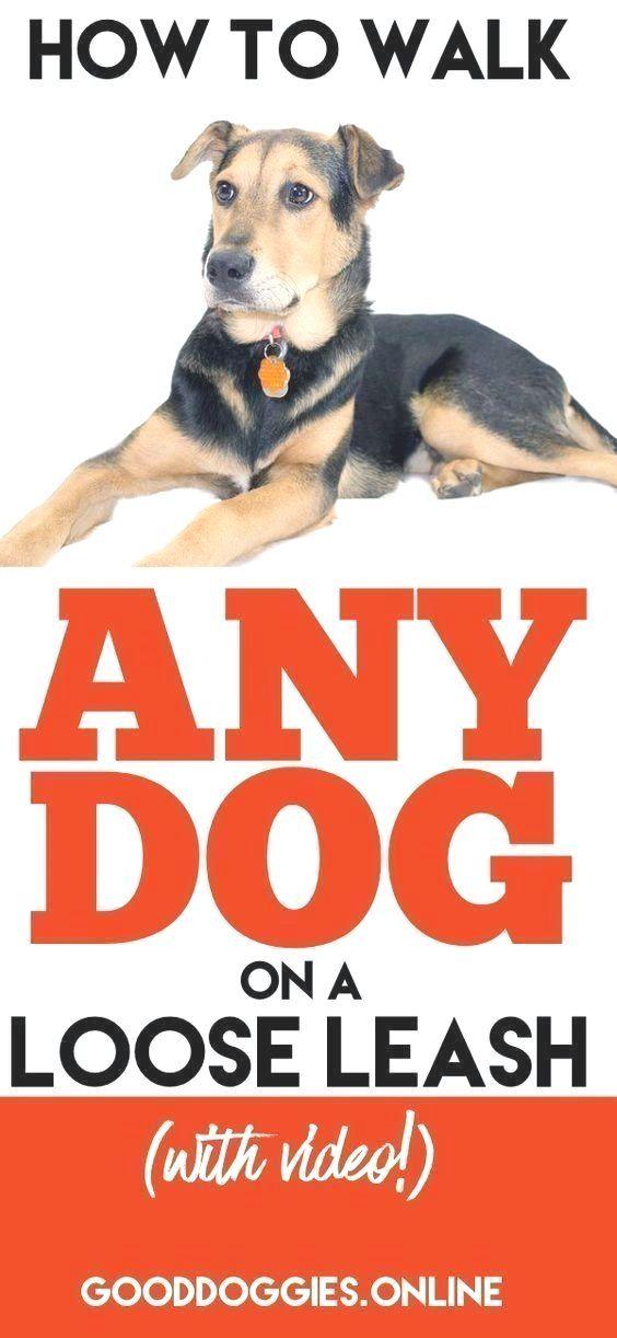 Dog Obedience Training Parkersburg Wv Dogtraining
