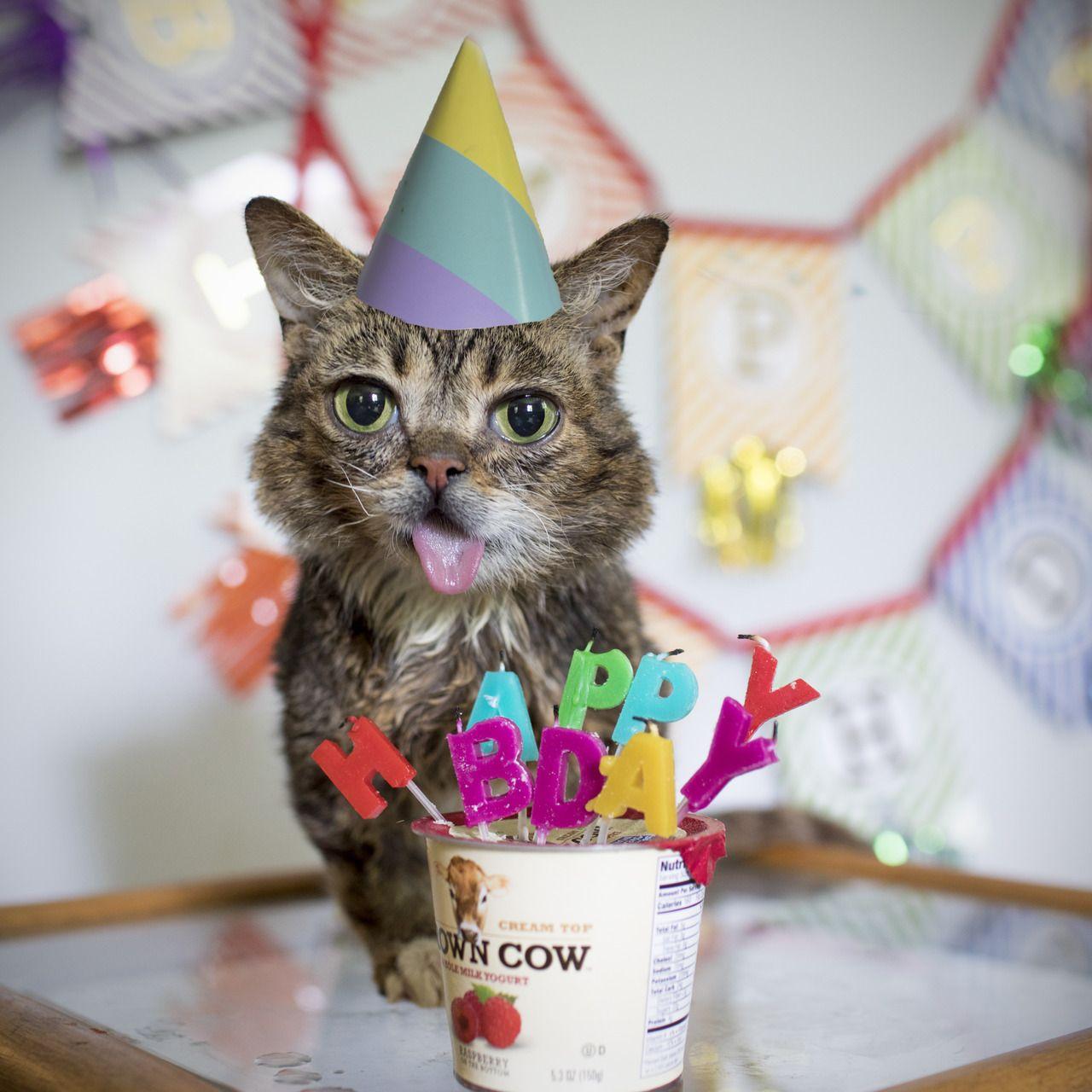 Celebrating 7 Years Of Science Magic And Inspiration Happy Birthday Bub Cat Birthday Bub The Cat Internet Cats