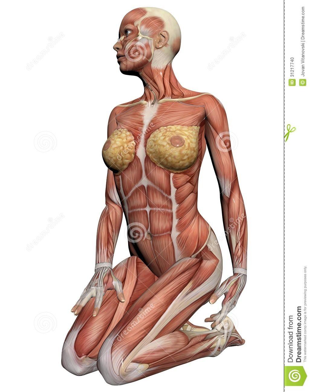 Anatomia umana - muscoli femminili fatti nel software 3d. | Anatomy ...