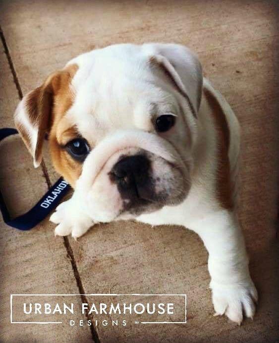 A Made For Hgtv Story Urban Farmhouse Designs Urban Farmhouse