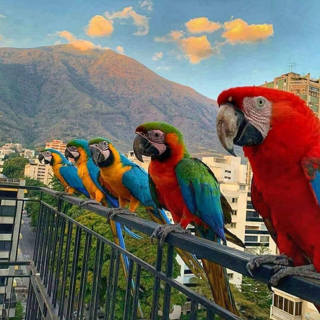 Tarotista Jose Iglesias On Twitter Caracas Architekturmodell